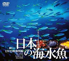 DVD「日本の海水魚」(SDA26)